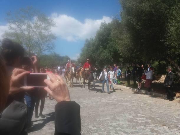 documenta-horses1