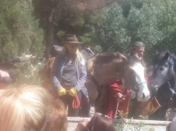 documenta-horses3