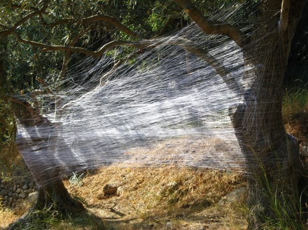 Voulgaris, 'A Monument For The Olive Grove III' Outdoor Installation 2010, Variable Dimensions, 10,500 meters of Silk thread